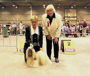 thsang-pa win the breed at dogshow den bosch