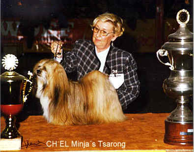 Lhasa Apso kennel EL Minja's,world famous Lhasa Apso kennel represented in all continents