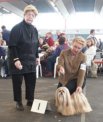 Lhasa Apso Topwinning Champion EL Minja's GooD as Gold the proud mother of 2 litters of Lhasa Apso puppies