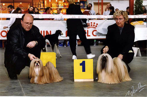 Frank and Sylvia with there Lhasa Apso Champions
