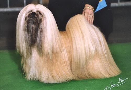 Fu Dog Ancestor | Dog Breeds | Fu Dog Blog