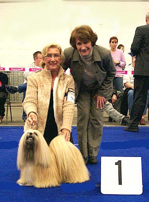 Cute Lhasa Apso in Dog Show